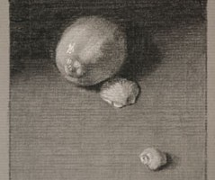 Lemon and Shells – Still life Drawing Number Thirty-four