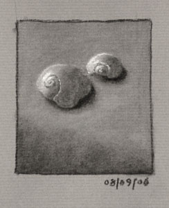 Still life drawing number twenty-one - two sea shells