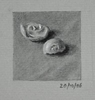 Two Shells – Still life Drawing Number Forty-six