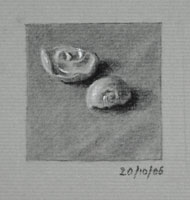 Still life drawing number forty-six - Two Shells
