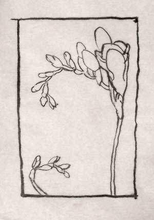 Composition studies - brush and ink drawing of freesias
