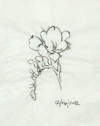 A tracing of one of the drawings of freesias in brush and ink.