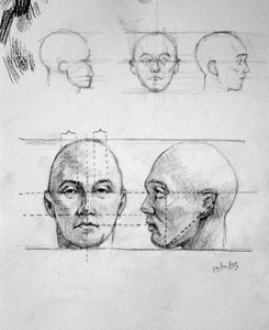 proportions of the human head