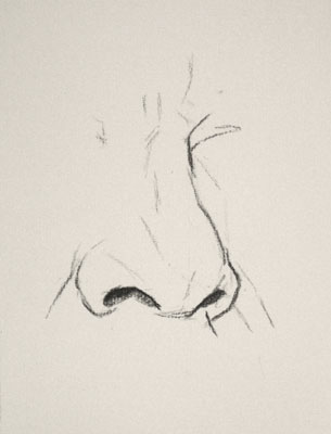 Nose drawing number fifteen