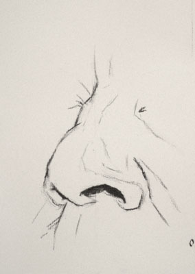 Nose drawing number sixteen