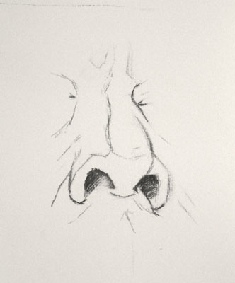 Nose drawing number seventeen