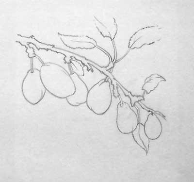 plums study