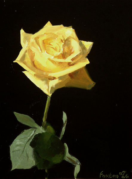 yellow-rose-2