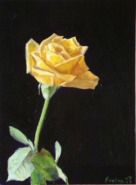 yellow-rose-1