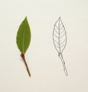 nature-contour-1