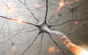 An illustration of neurons firing