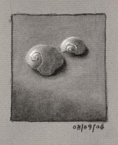 Still life drawing number twenty-one - two sea shells