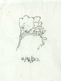 A tracing of the other drawing of freesias.
