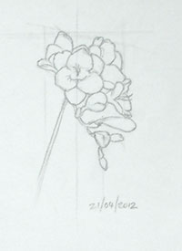 A new drawing of a freesia to become the domiant element in the new design.