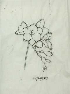 A tracing of the last freesia study in brush and ink.