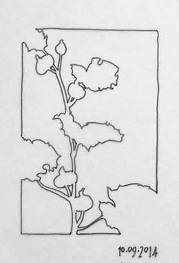 A negative space tracing of the hollyhock drawing