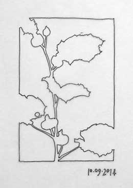 A Hollyhock drawing as a negative space design