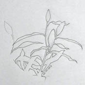A simple negative shape drawing of lily buds