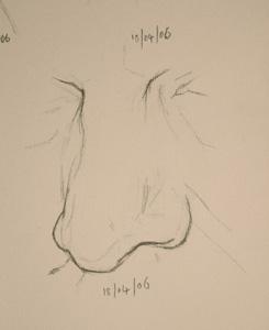 Nose drawing number thirteen