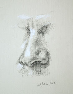 Nose drawing number two