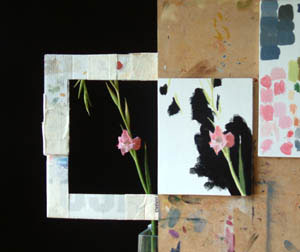 Pink Gladiolus in progress 1
