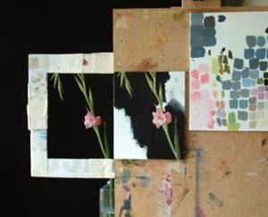 Pink Gladiolus in progress 2